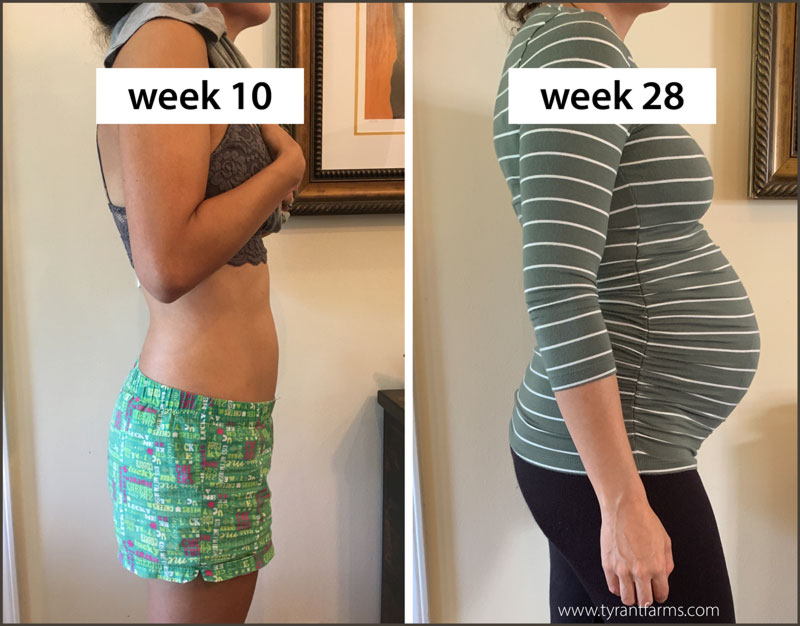 The Tyrant, week 10 vs week 28 in her pregnancy.
