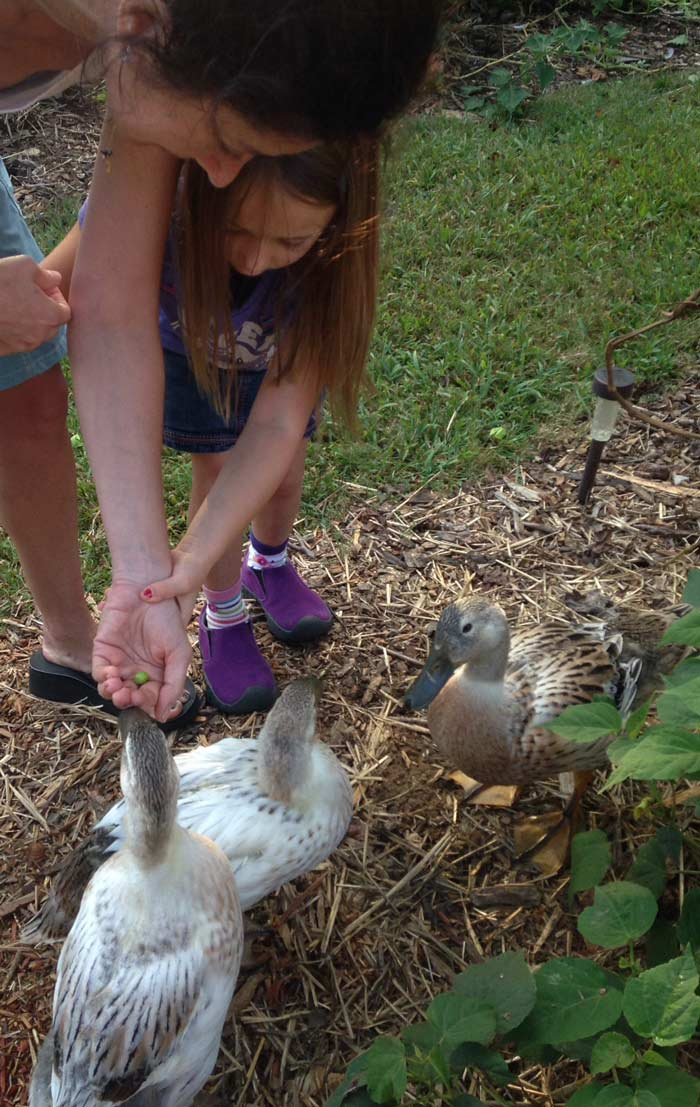 Susan's sister and niece helping us train our girls that a palm with something in it means a treat. In this case, the treat was an unripe groundcherry. / How to get your ducks to like you
