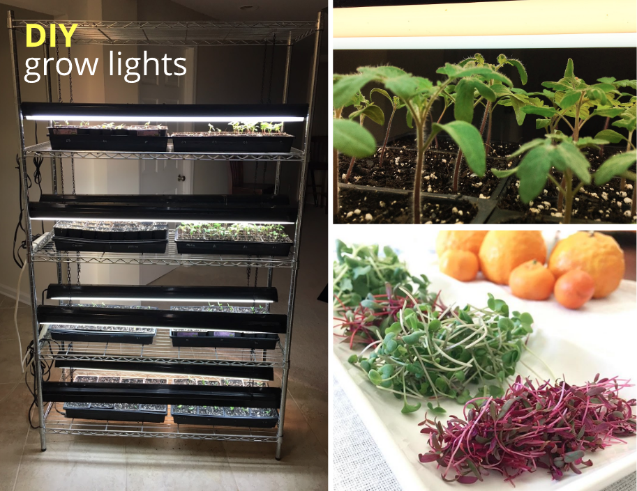 Our DIY grow lights allow us to grow healthy seedlings and microgreens throughout the year.