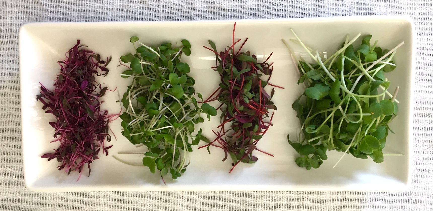 Gorgeous flavor- and nutrition-packed microgreens grown under our DIY grow lights in January.