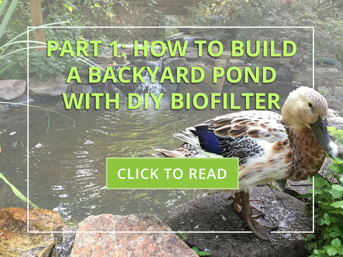 how to build a diy backyard pond with biofilter - the ultimate step by step guide!