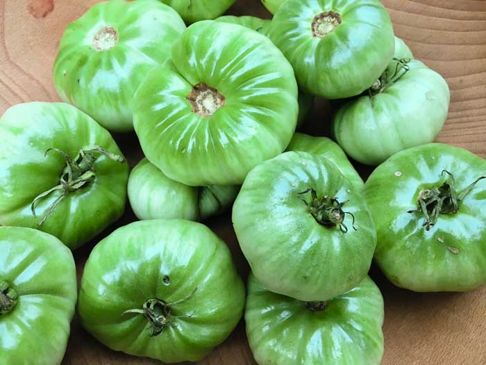 Some of the larger green tomatoes from Oak Hill Cafe & Farm.