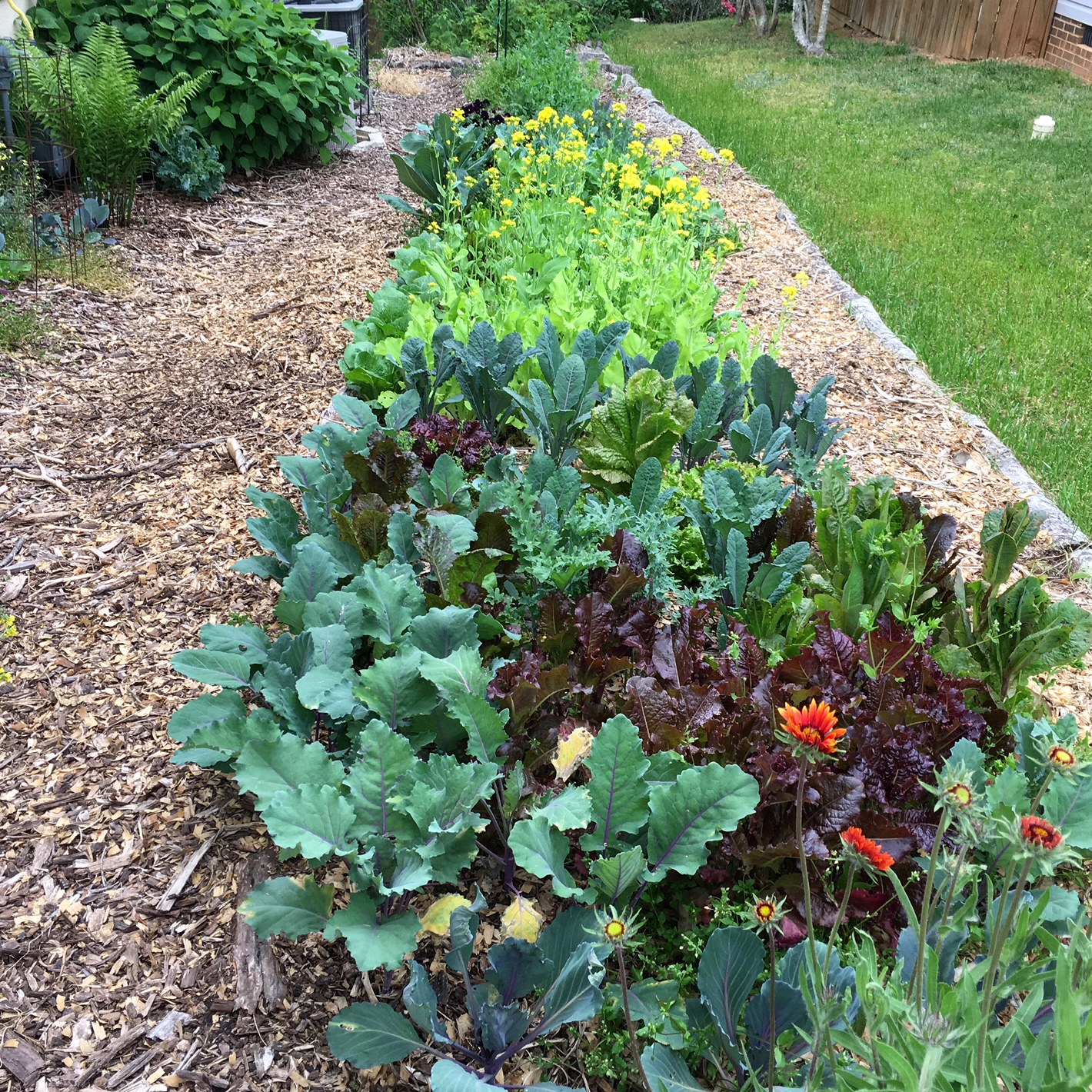 A bed of cool weather crops in our spring garden.