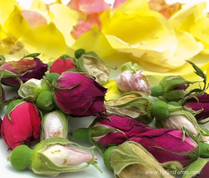 Rose buds and petals harvested at Tyrant Farms.