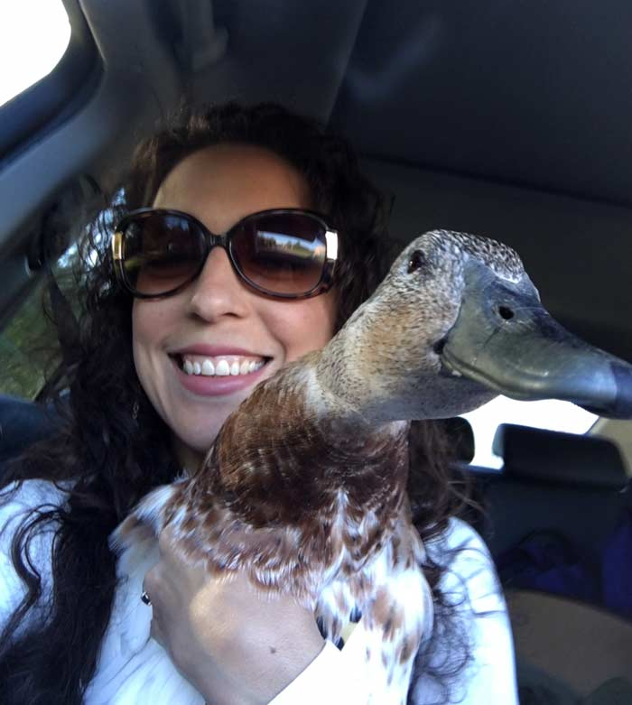 Svetlana the duck on one of many road trips with The Tyrant. We told her these trips were