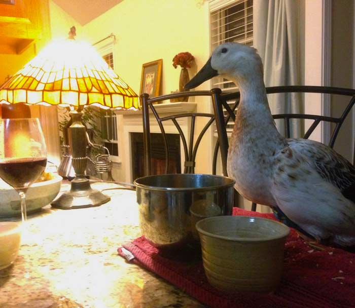 Our evening ritual often included Svetlana sitting at the counter watching us make supper while she enjoyed eating one of her multiple nightly meals.