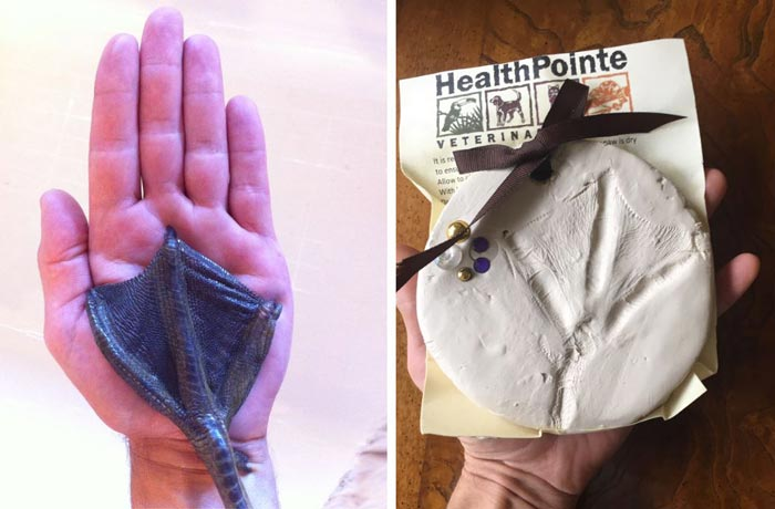 Left: A picture of Svetlana's flipper taken back in 2015. Right: The mold of her flipper made for us by HealthPointe Veterinary Clinic after she died.
