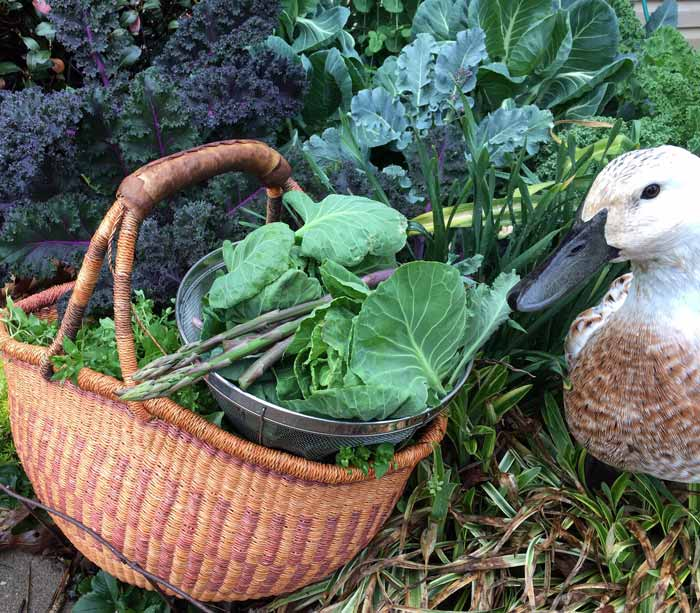Svetlana especially loved springtime, when the harvest baskets are full of greens, the chickweed is plentiful, and the insects, worms, and crustaceans are bountiful.