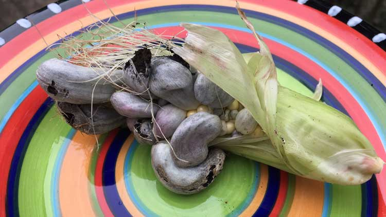 Huitlacoche for huitlacoche soup