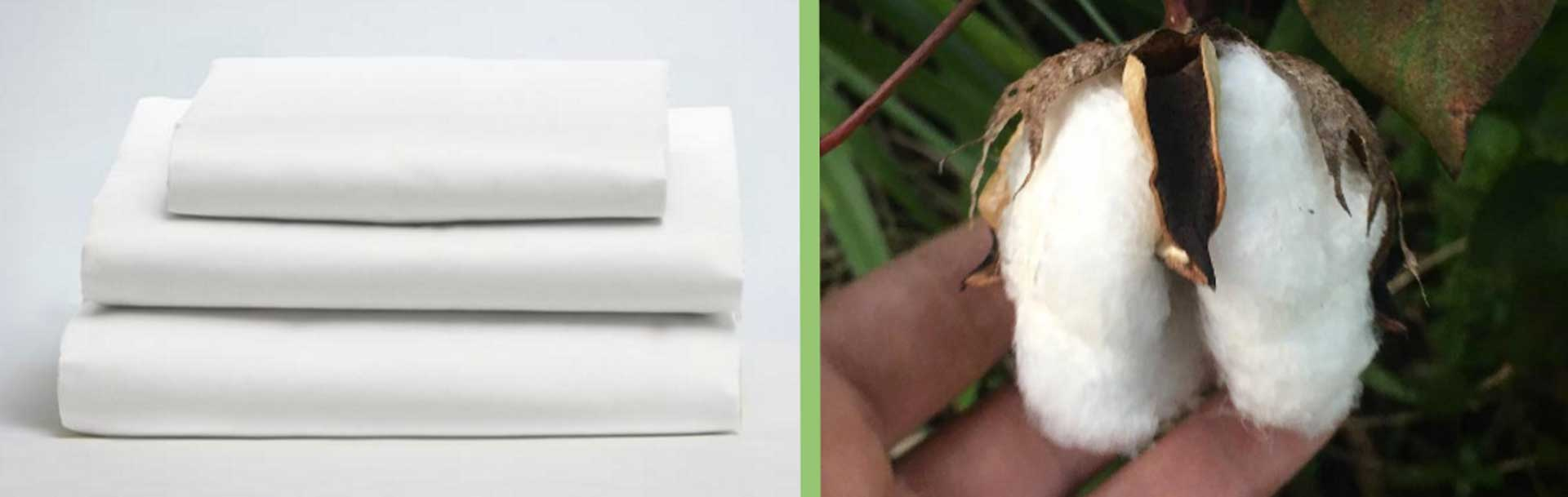 Holy sheet! 3 criteria for finding the perfect set of organic bed sheets. thumbnail