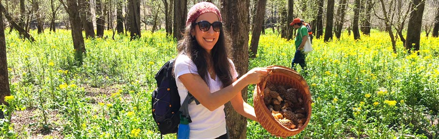 Morel mushrooms: a massive foraging haul and some new recipes thumbnail