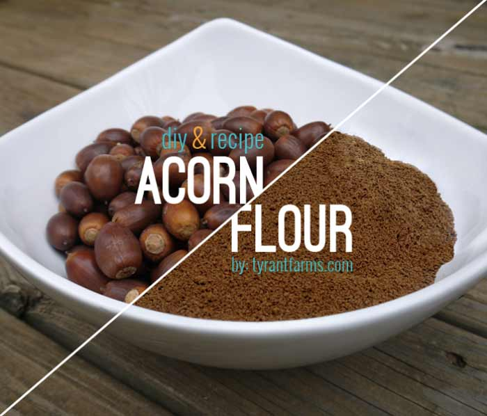 How to make acorn flour and acorn recipes - step by step guide by Tyrant Farms