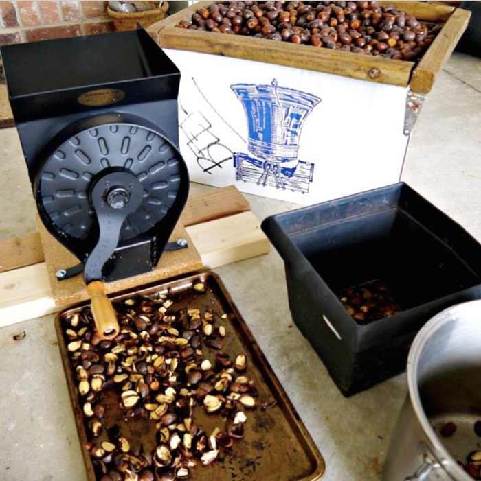 Davebilt nutcracker cracking burr oak acorns to make acorn flour