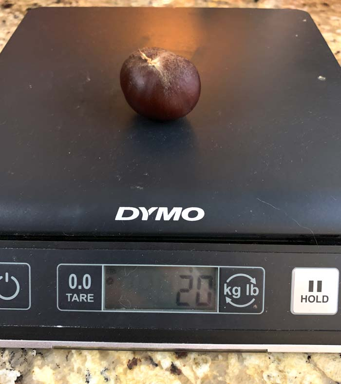 Our Chinese chestnuts get as large as 20 grams, but these probably aren't anywhere close to world champions.