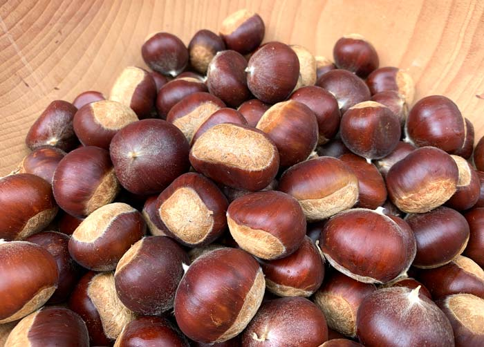 We're a long way from growing 100 pounds of chestnuts per tree, but we can still dream. Hopefully, whoever happens to own our land for the next few hundred (or thousand) years after we die likes chestnuts.