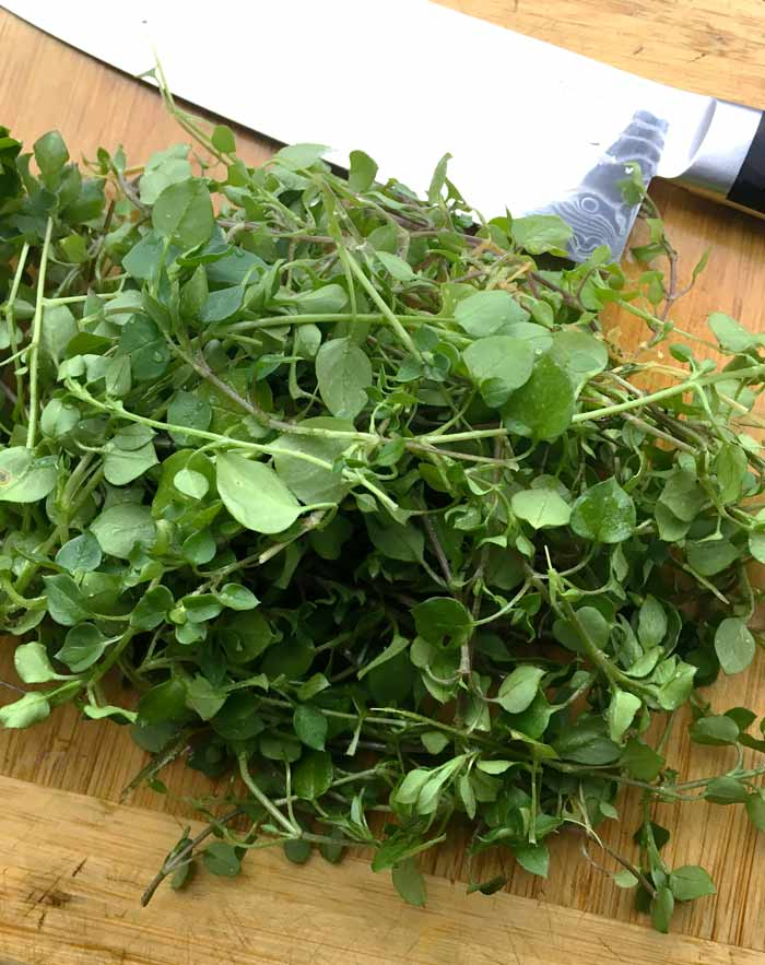 Chickweed on the cutting board at Tyrant Farms. (Stellaria media)