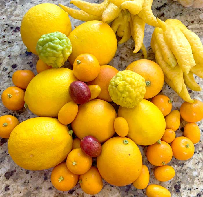 Some citrus varieties like calamondin oranges and kumquats are eaten whole, skin and all. All other citrus varieties can be used to make zest. Others, like Buddhas hand citrons (pictured top right) contain no fruit pulp and are only used for zest, candies, and other concoctions.