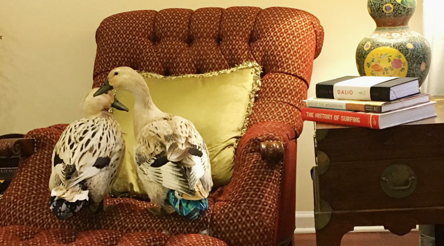 Two of our girls, Marigold and Jackson modeling their Party Fowl duck diaper harnesses.
