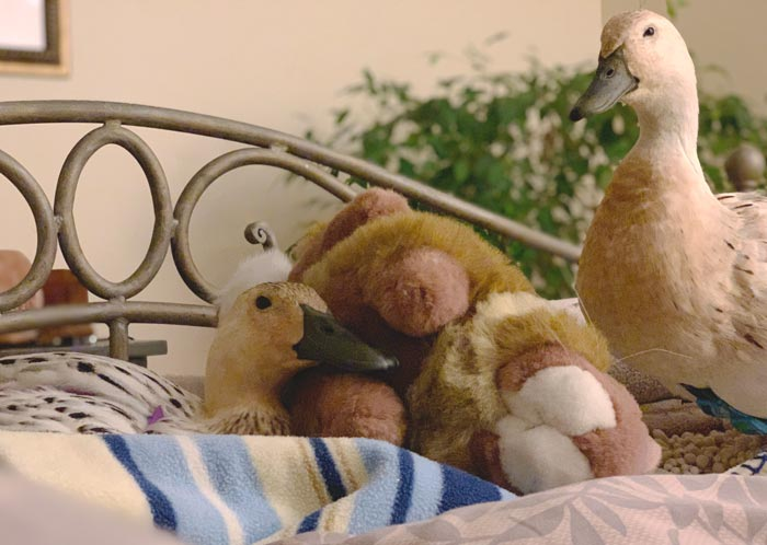 Good morning! Mawy and Jackson waking up in the morning. Mawy is particular fond of Hawk, her pet stuffed rabbit.