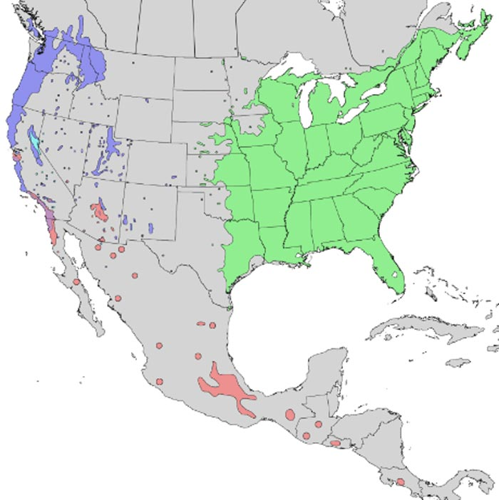 Native range of North American Sambucus nigra subspecies. Image courtesy Elbert L. Little, Jr., of the U.S. Department of Agriculture, Forest Service.