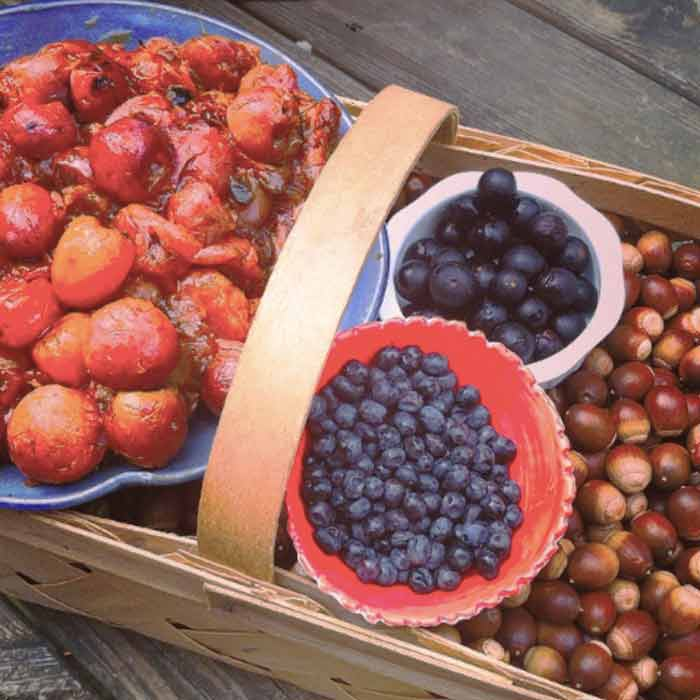 Tastes from a fall forage: American persimmons, tupelos, muscadines, and acorns.