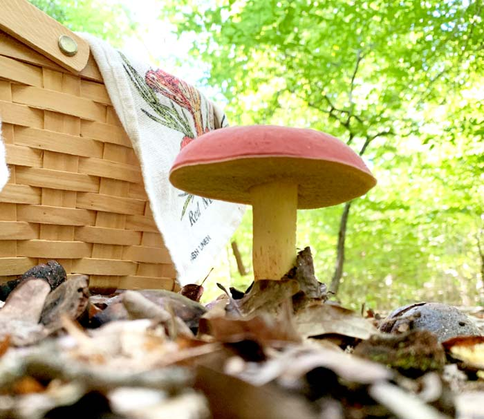 The gift ideas in our foraging & wildcrafting gift guide won't help your gift recipient find bicolor bolete mushrooms, but it will help them identify, harvest, and cook them!