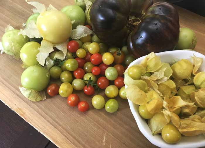 Tomatoes, peppers, and eggplants are the most common nightshades in a summer garden, but consider making room for tomatillos, ground cherries, and other Physalis nightshades as well.