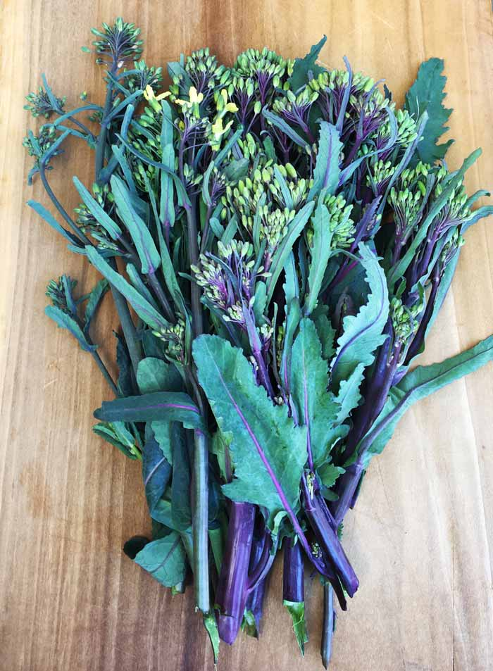 Brassica florets: colorful, beautiful, flavorful, and packed full of nutrition. What's not to love?