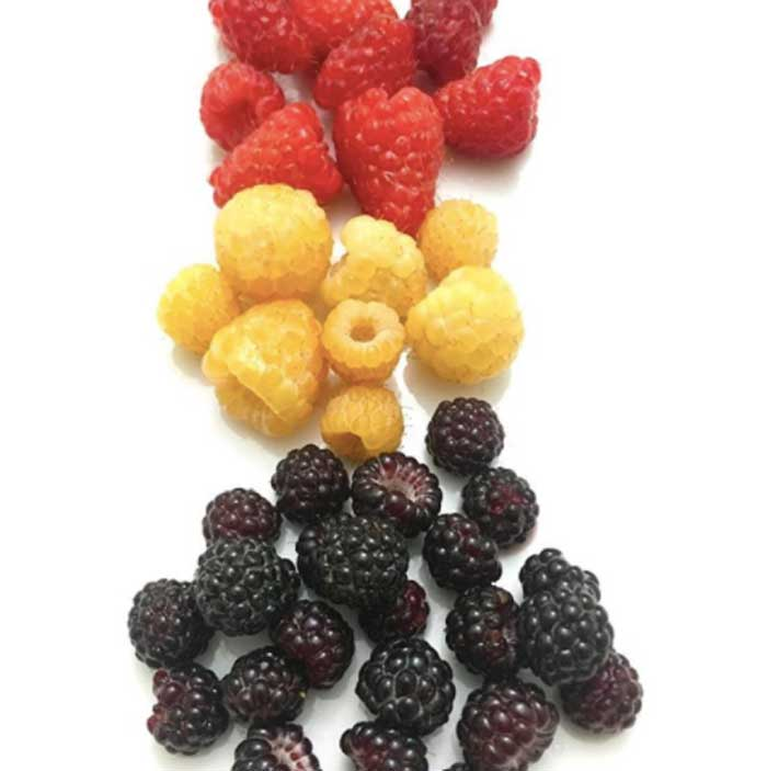 Black, gold, and red raspberries.