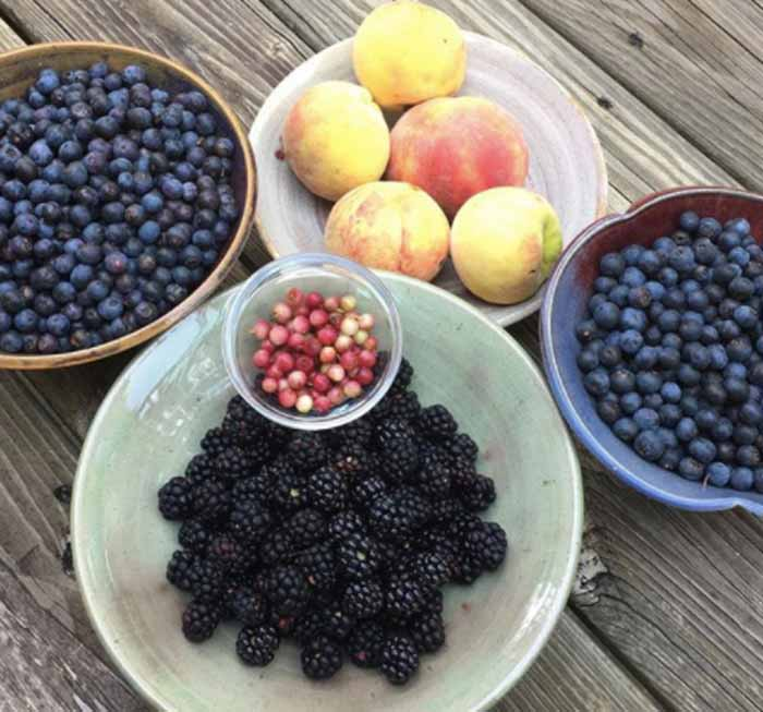 Want to grow organic fruit in the southeast? Read through our list of easiest and hardest to go fruit species before you invest time and money in fruit plants.