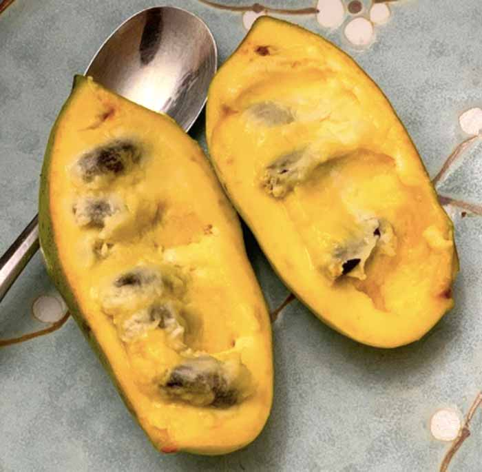 A perfectly ripe pawpaw. The fruit has fairly large seeds inside.