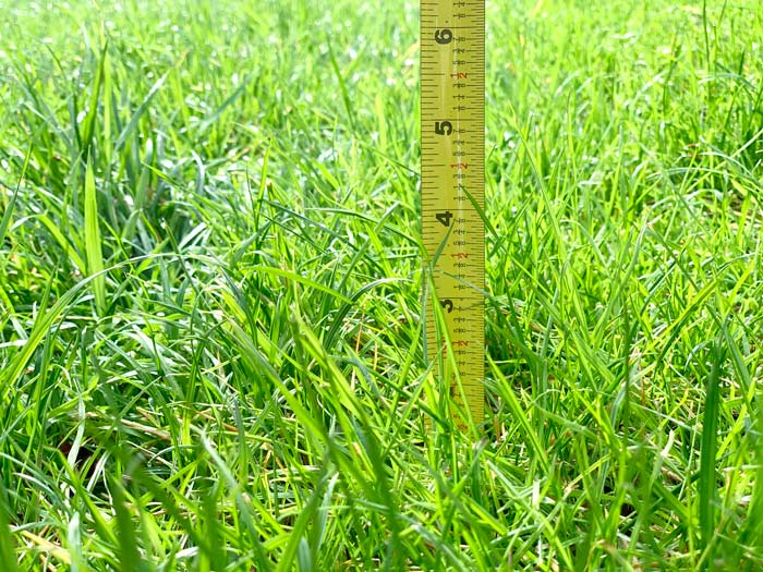 Ready for a trim! Measure your grass height from soil surface to blade tip. DIY organic lawn care tips.