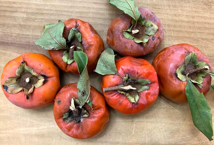 These overripe Japanese persimmons were reincarnated as persimmon bread.