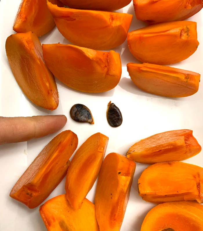 Japanese persimmon seeds next to slices of Japanese persimmons. Each fruit may have a few such seeds inside, but they're very small relative to the size of the fruit.
