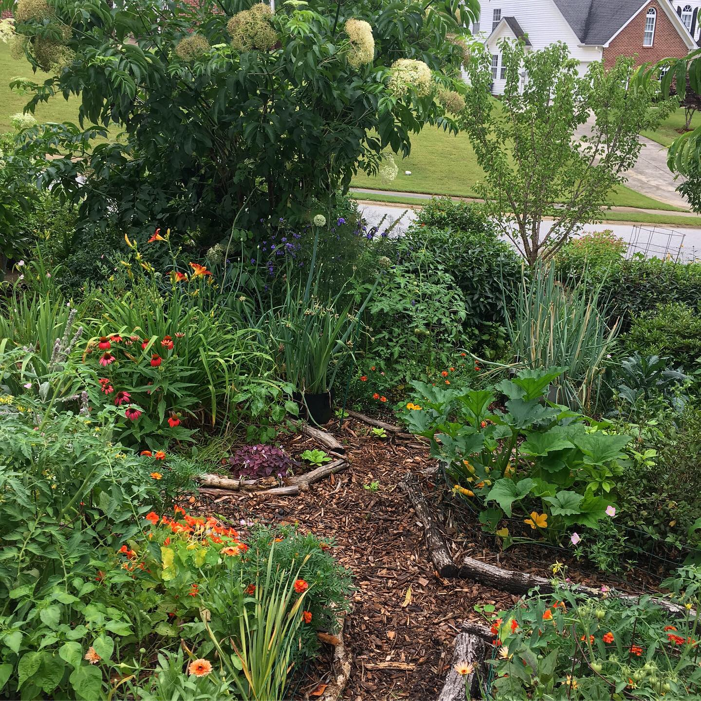 We think it's time to rethink the American yard. Your yard can provide safe habitat for countless pollinators, produce organic food for you, and sequester huge amounts of carbon. Or you can just grow grass using synthetic chemicals/pollutants.