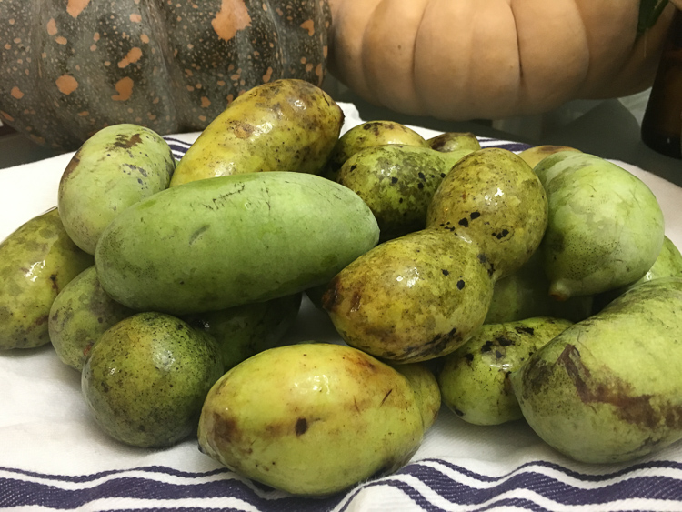 Ripe pawpaws look like small, bruised mangoes. Don't let their lack of surface beauty fool you - under that skin is mango-banana-cream flavored goodness.
