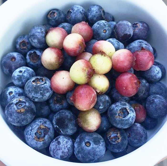 Summer wouldn't be summer without blueberries. We grow multiple varieties. One of our faves is lemonade blueberries (the light-colored ones on top). Fruit that grows in part shade.
