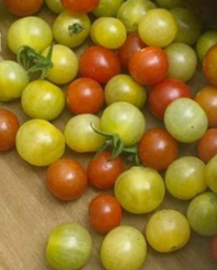 We get piles of yellow currant and Matt's Wild Cherry tomatoes from our part shade-grown plants.