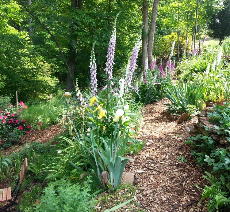 We have lots of biodiversity, including both edible and non-edible flowering plants throughout our garden. How to start a garden by Tyrant Far ms