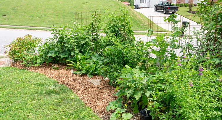 Our front yard gardens/edible landscape starting to take shape years ago. How to start a garden by Tyrant Farms