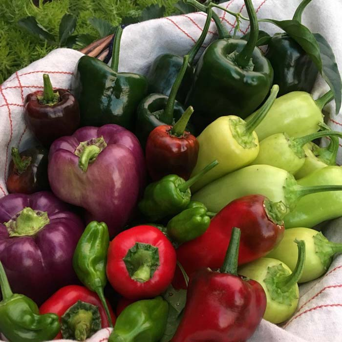 Everybody loves warm weather garden produce like peppers, but your garden can likely produce yields year round, depending on where you live.