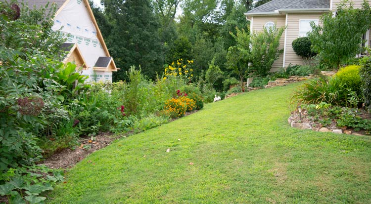 Our front yard back in 2014. Our front yard is full sun, but we also have garden areas that are full shade. Different areas of our yard are ideally suited to different types of plants. How to start a garden by Tyrant Farms