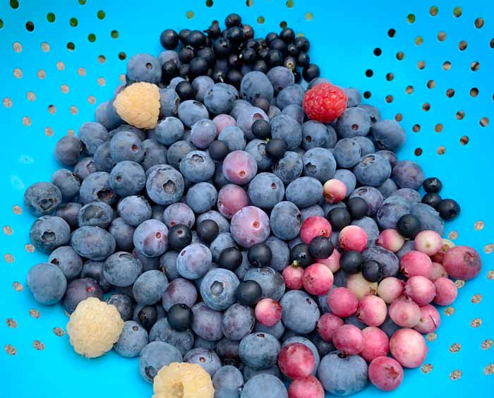 A few summer berries that make an ideal candidate for this recipe: lemonade blueberries, regular blueberries, gold and red raspberries, and wonderberries (the small black berries).