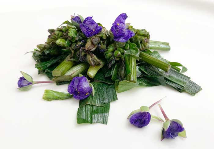 Tradescantia leaves, stems, buds, and flowers all cooked into one dish.
