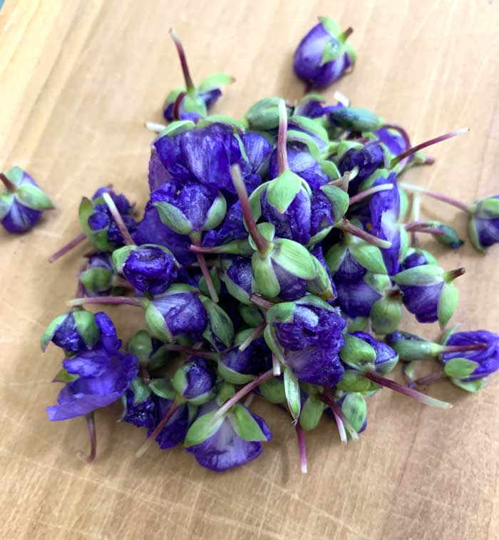 Tradescantia flowers harvested for a garnish.