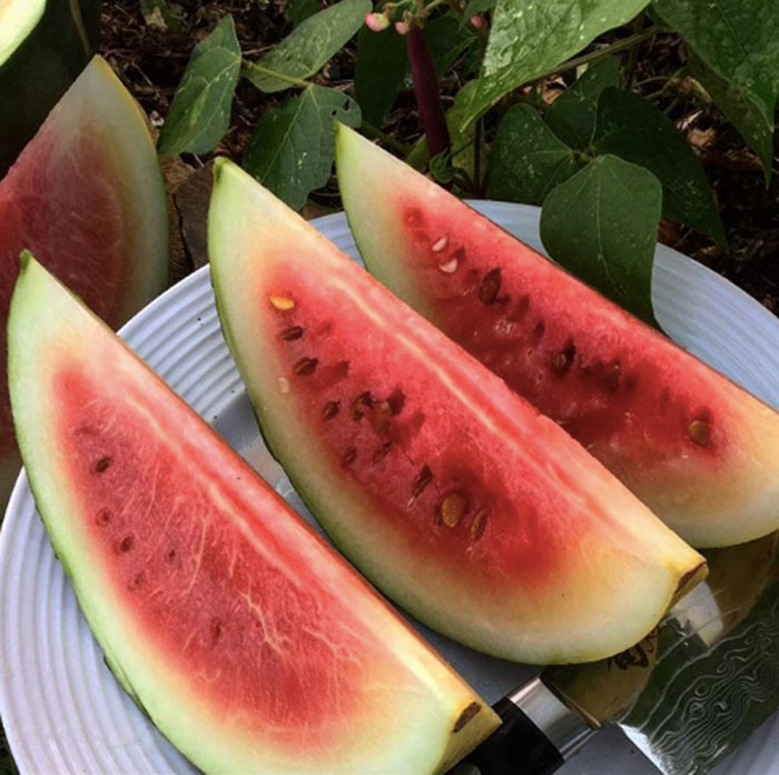 Mmm. Nothing beats homegrown organic watermelon on a hot summer day! Make sure to save those watermelon seeds for cooking and for growing watermelon in future years.