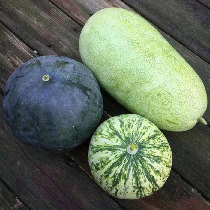 A few interesting heirloom watermelon varieties we grew this summer: (left) Blacktail Mountain - an early variety that grows well in northern climates; (bottom) the exceptionally drought-tolerant Navajo Red-Seeded; (top right) Ali Baba from Iraq - one of the sweetest melons we've ever tasted. Edible water melon seeds