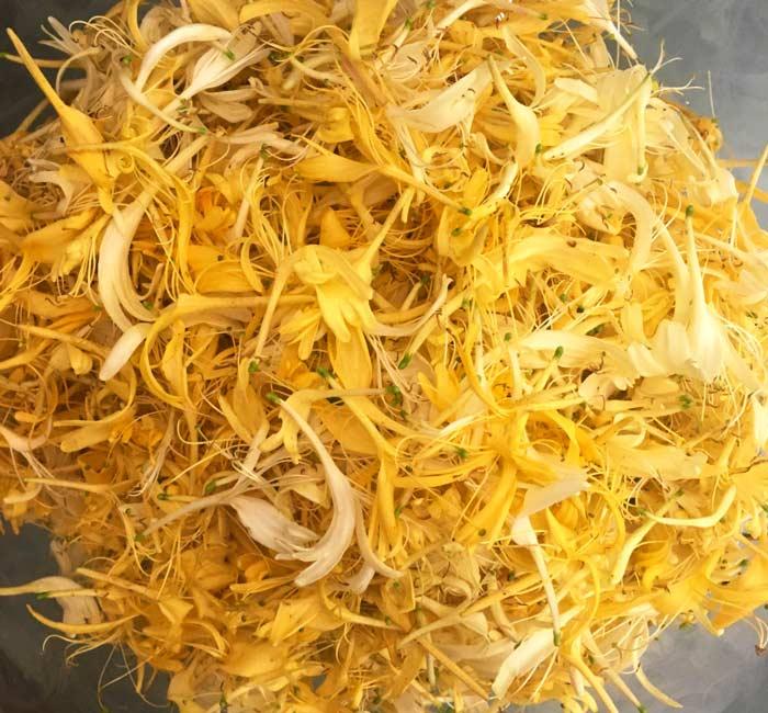 Edible honeysuckle flowers (Lonicera japonica)