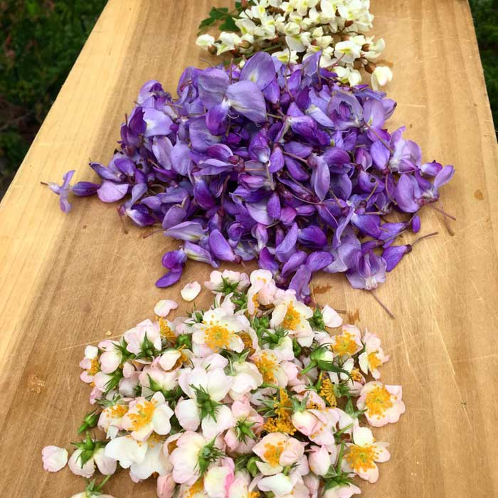 Edible wild flowers: wild roses, wisteria, and black locust flowers.