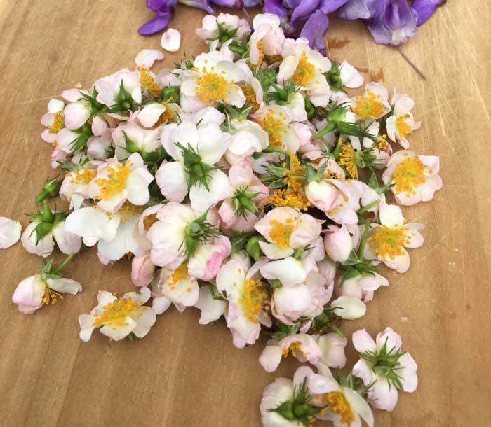 Edible wild rose flowers